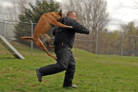 police_dog_attack.jpg