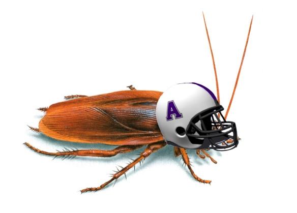 cockroach helmet